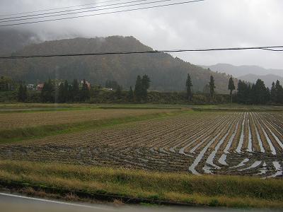魚沼産コシヒカリの田んぼでは冷たい雨が降っています