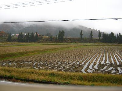 今朝は雨で気温が低いです@魚沼産コシヒカリの田んぼ