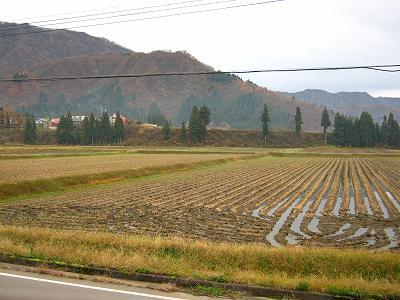 今朝はくもりで寒さを感じません@魚沼産コシヒカリの田んぼ