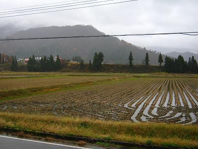 今日の魚沼産コシヒカリの田んぼは一日中雨降りです
