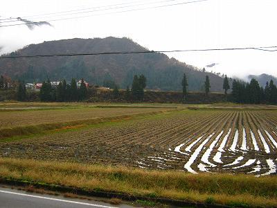 昨日からの雨が止んでいます@魚沼産コシヒカリの田んぼ