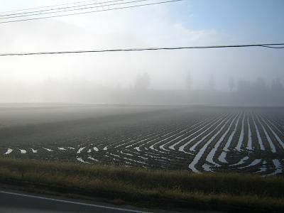 今朝の魚沼産コシヒカリの田んぼはすごく寒いです