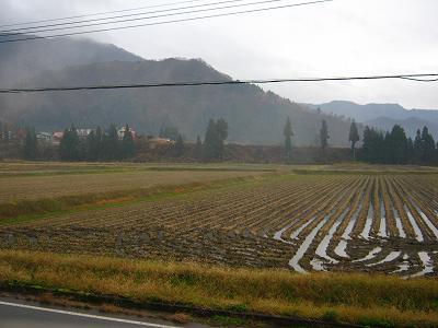 くもりで暗い朝@魚沼産コシヒカリの田んぼ