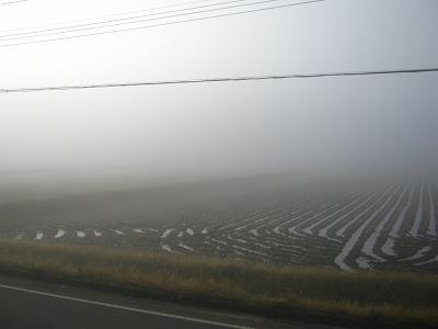 冷え込んでいて霧が深い朝です