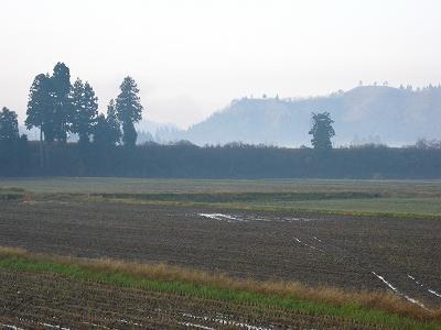 今朝も魚沼産コシヒカリの田んぼは寒いです
