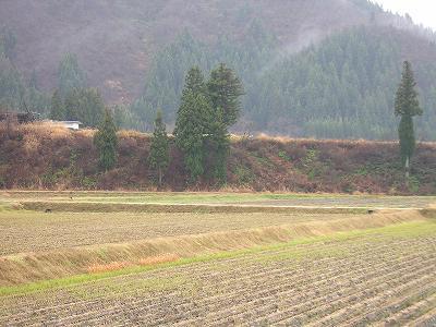 今日は雨降りです@魚沼産コシヒカリの田んぼ