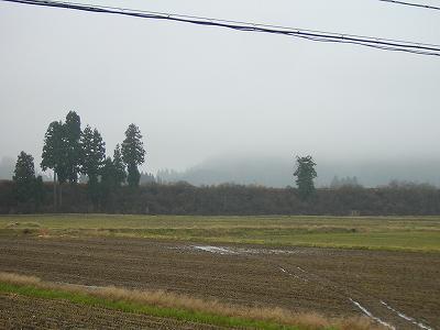 今朝はくもりです@魚沼産コシヒカリの田んぼ
