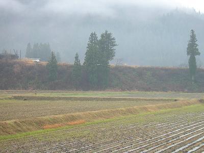 雨降りで山に霧がかかっています@魚沼産コシヒカリの田んぼ