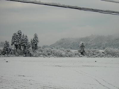 雪が積もりました@魚沼産コシヒカリの田んぼ