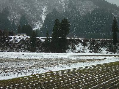 今朝はとても寒いです@魚沼産コシヒカリの田んぼ