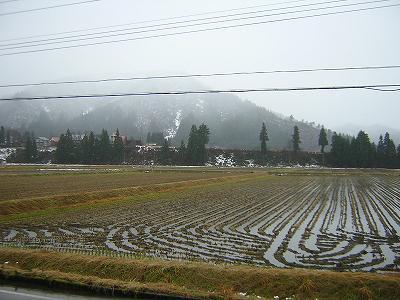 寒い一日で雪が降り続いています@魚沼産コシヒカリの田んぼ