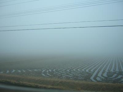 今朝は霧に包まれています@魚沼産コシヒカリの田んぼ