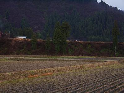 今日も雨降りです@魚沼産コシヒカリの田んぼ