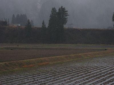 天気が荒れてきました@魚沼産コシヒカリの田んぼ