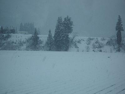 魚沼産コシヒカリの田んぼはほぼ一日中雪が降っていました