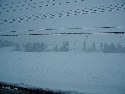 魚沼産コシヒカリの田んぼではかなり強く雪が降っています