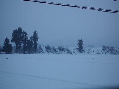 魚沼産コシヒカリの田んぼでは弱い雪が降っています