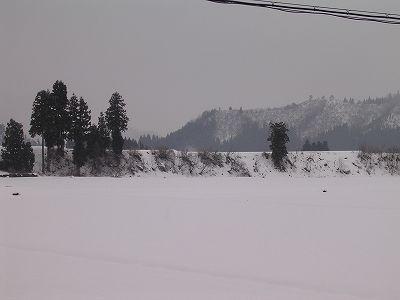 冷え込んでいますが雪は弱いです@魚沼産コシヒカリの田んぼ