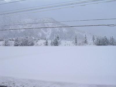 さらさらの雪が降っています@魚沼産コシヒカリの田んぼ