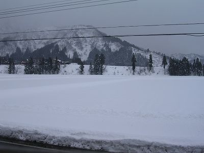 みぞれまじりの弱い雪が降っています@魚沼産コシヒカリの田んぼ