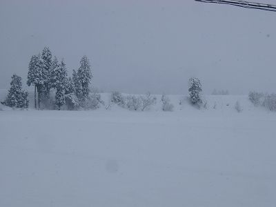 昨日から30cmくらいの雪が積もりました@魚沼産コシヒカリの田んぼ
