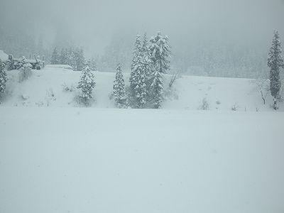 昨日からまた雪が30cmほど積もりました@魚沼産コシヒカリの田んぼ