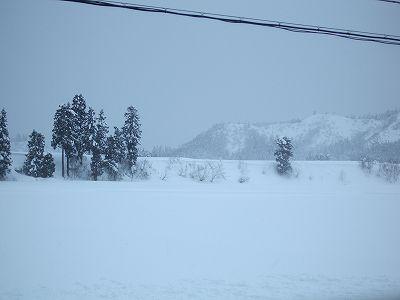 厳しい冷え込みで午後になっても気温が低いままでした
