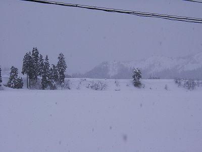 今日は湿った雪になっています