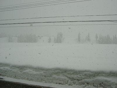 今日もまた雪が降っています@魚沼産コシヒカリの田んぼ