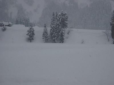 湿った雪になりました@魚沼産コシヒカリの田んぼ