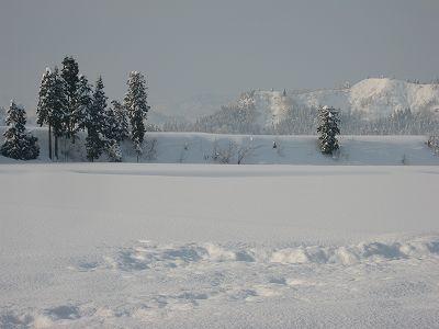 氷点下の厳しい冷え込みです@魚沼産コシヒカリの田んぼ