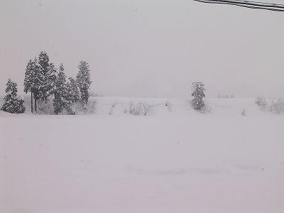 また10cmほど雪が積もりました@魚沼産コシヒカリの田んぼ