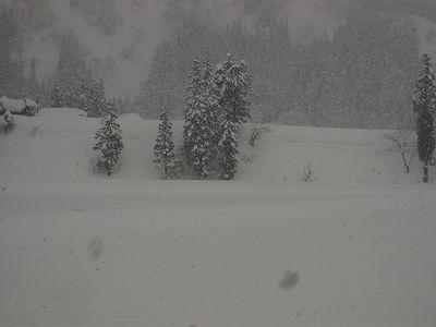 また5cmほど雪が積もりました@魚沼産コシヒカリの田んぼ