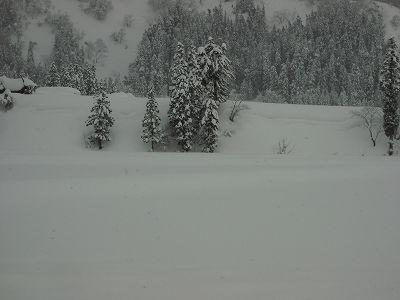 また30cm程の雪が積もりました@魚沼産コシヒカリの田んぼ