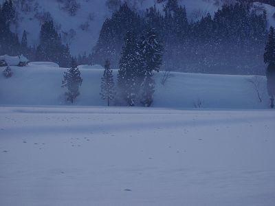 放射冷却のために氷点下の厳しい冷え込みでした@魚沼産コシヒカリの田んぼ