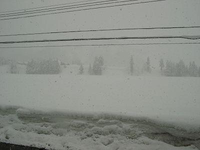 昨晩から今朝にかけて20cmほど雪が積もりました