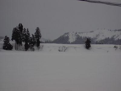 今日はくもりでときおり雪がちらついていました@魚沼産コシヒカリの田んぼ