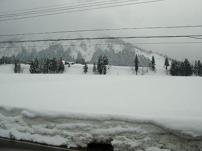 予報に反してくもりで雪は降っていません@魚沼産コシヒカリの田んぼ