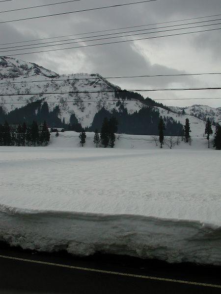 雪解けが進んでいます@魚沼産コシヒカリの田んぼ