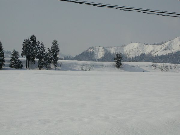 10cmちょっと雪が積もりました@魚沼産コシヒカリの田んぼ