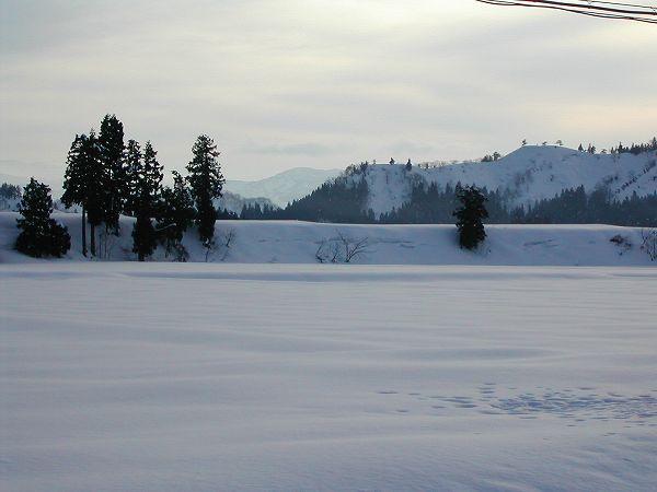3日続きのまとまった雪・・・今日の昼間は晴れて雪が解けてきました