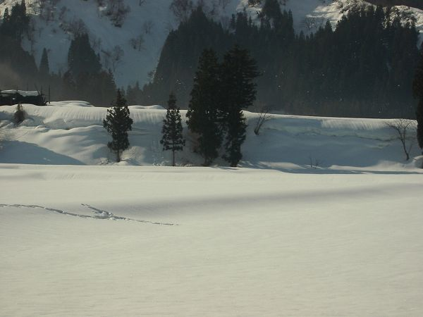 青空が広がって雪面がまぶしいです@魚沼産コシヒカリの田んぼ