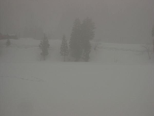 霧で視界が悪い朝です@魚沼産コシヒカリの田んぼ