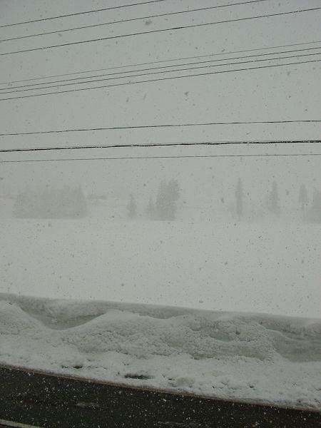 強く雪が降っていて風も強いです@魚沼産コシヒカリの田んぼ