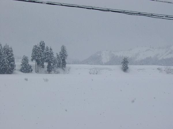 また5cm程の雪が降りました@魚沼産コシヒカリの田んぼ
