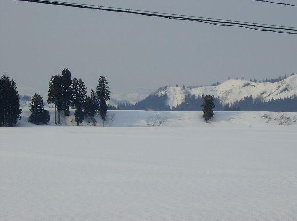 今朝もまたうっすらと雪が積もりました@魚沼産コシヒカリの田んぼ
