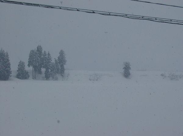 今朝もまた雪が降っています@魚沼産コシヒカリの田んぼ