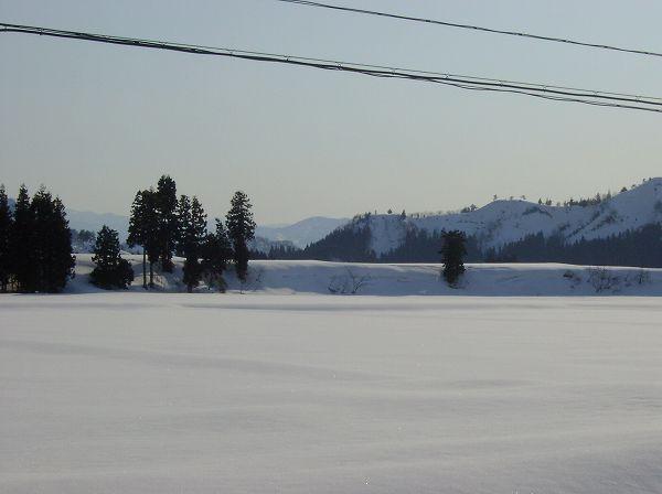 快晴の青空であたたかい一日でした@魚沼産コシヒカリの田んぼ