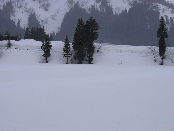 今朝は雪がちらついていました@魚沼産コシヒカリの田んぼ