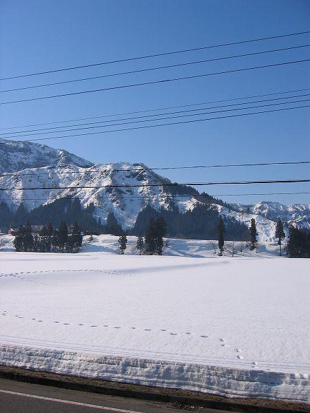 今朝はよく晴れて冷え込んでいます@魚沼産コシヒカリの田んぼ